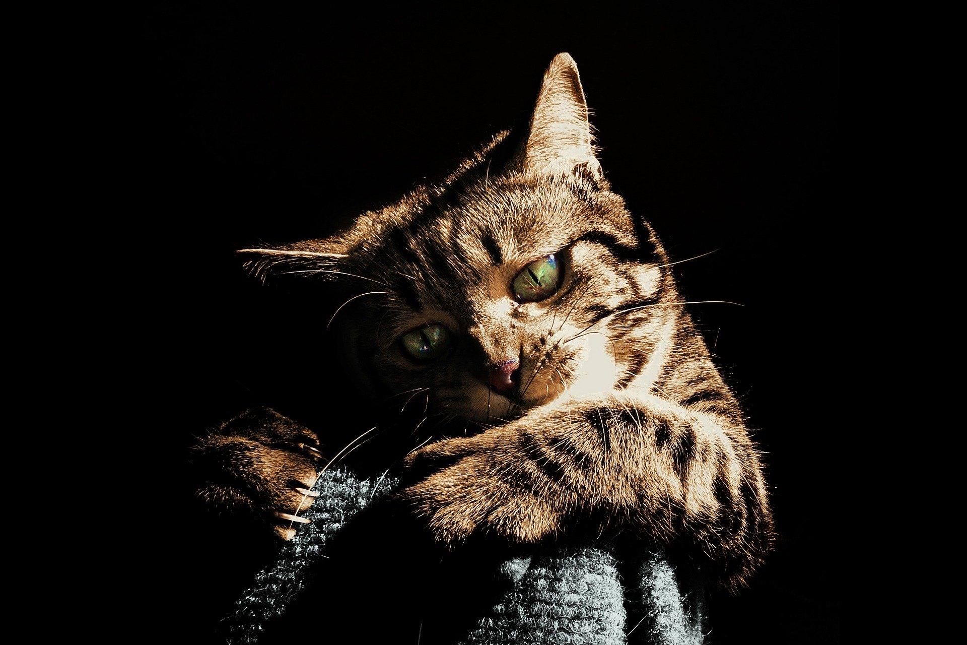 Kousnutí kočkou nesmí být nikdy podceňováno - může způsobit vážnou infekci vyžadující hospitalizaci. Jak se chránit před kousnutím kočkou?