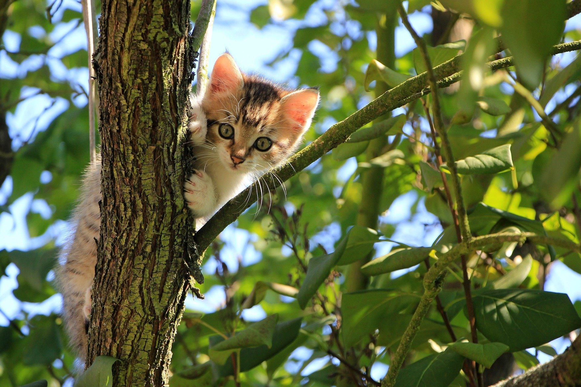Kočka na stromě může být pro chovatele stresující pohled. Řešením je zůstat klidný.