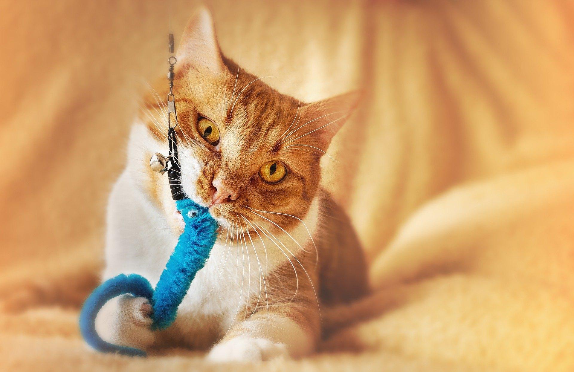 Hraní s vaší kočkou by mělo být běžnou a každodenní činností.