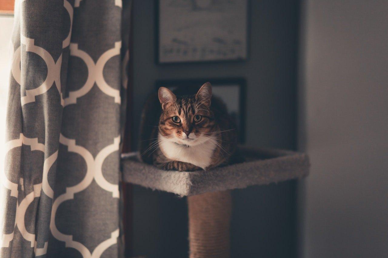Jedním z nejdůležitějších doplňků pro domácí kočku je škrabadlo.