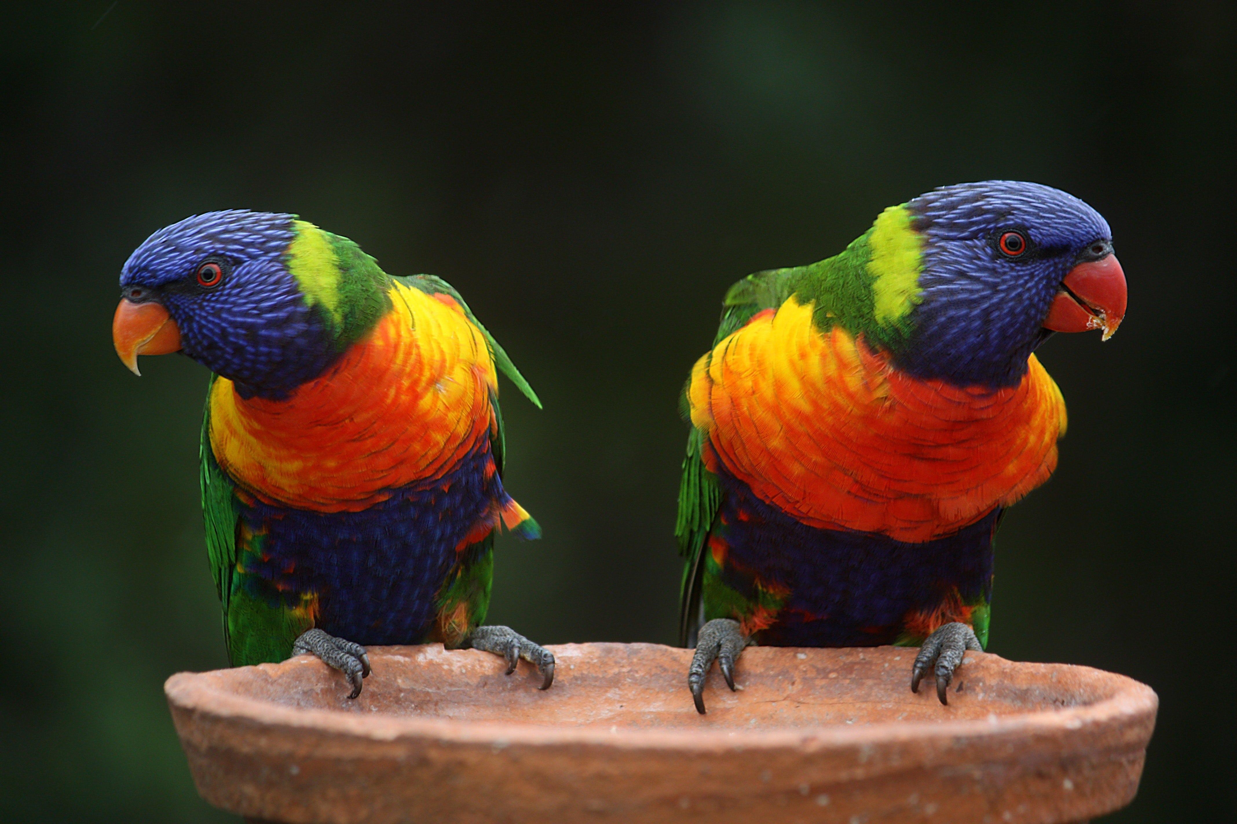 Korela, Ara, nebo Andulka? Co se liší a co mají tito krásní papoušci společné?