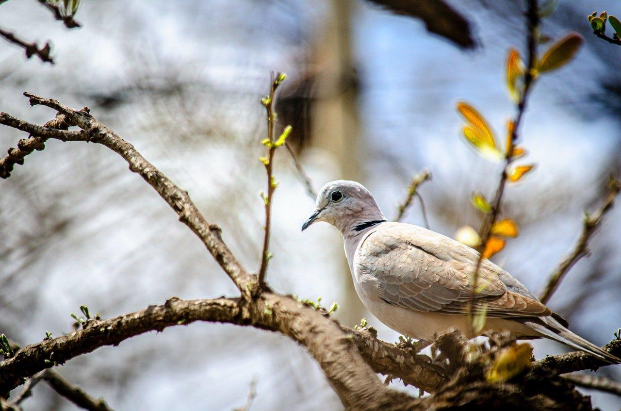 Nemoci holubů - víte, čím mohou naši holubi onemocnět?