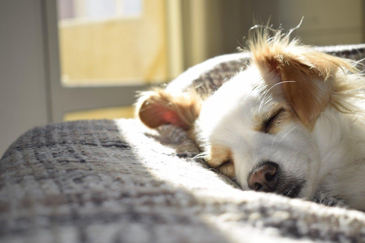 Epilepsie u pse je jedna z nejčastějších neurologických chorob. Může mít různou formu a důvod.