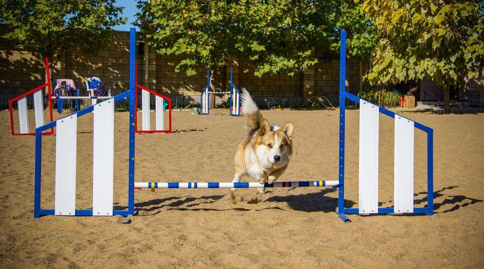 Je agility vhodné i pro malá plemena?