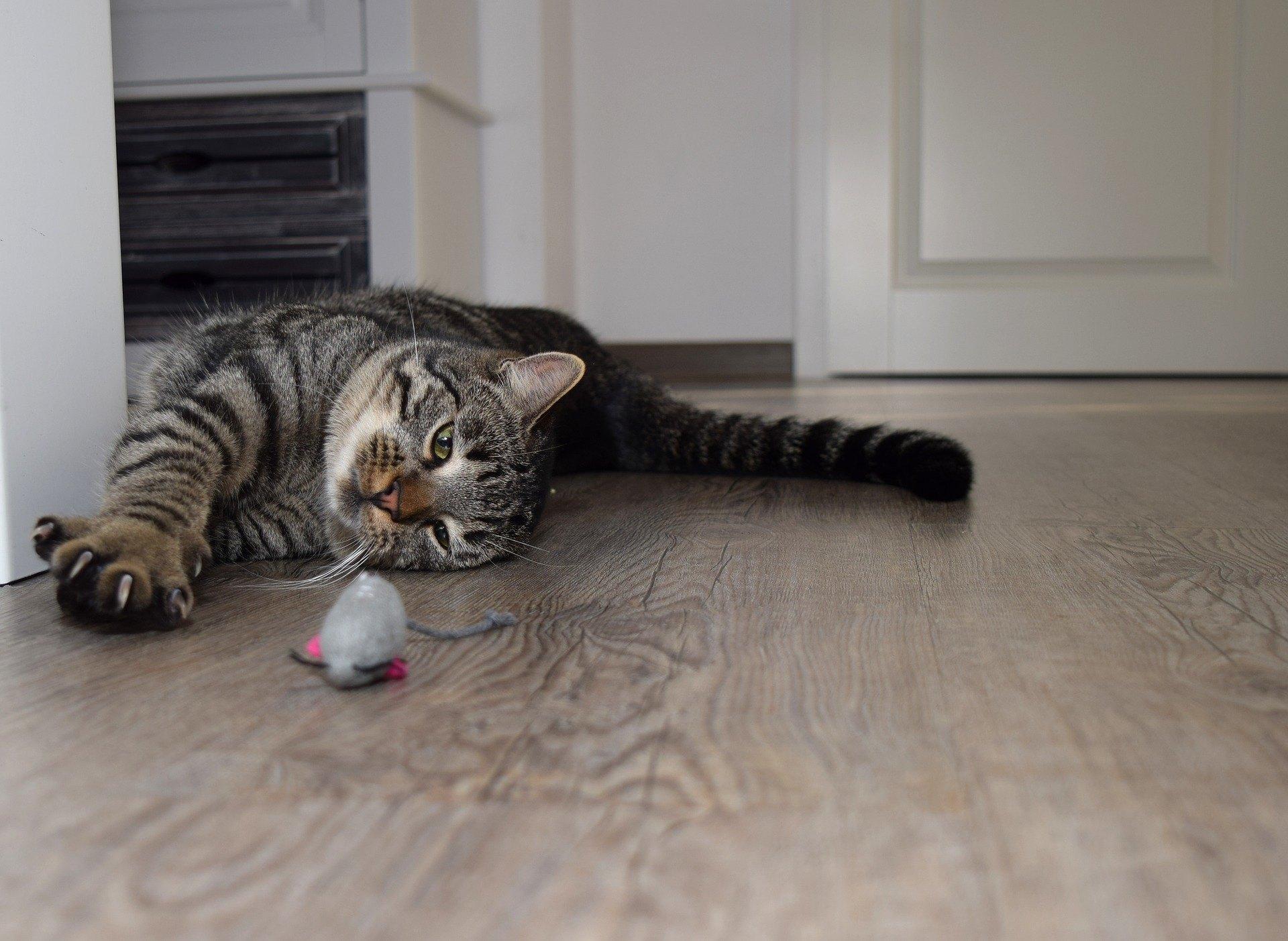 Myš pro kočku je dobrý způsob, jak zpestřit kočce stravu.