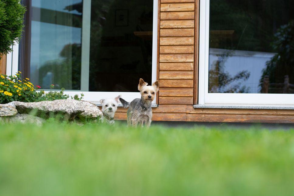 Zajímáte se o plemena malých psů?