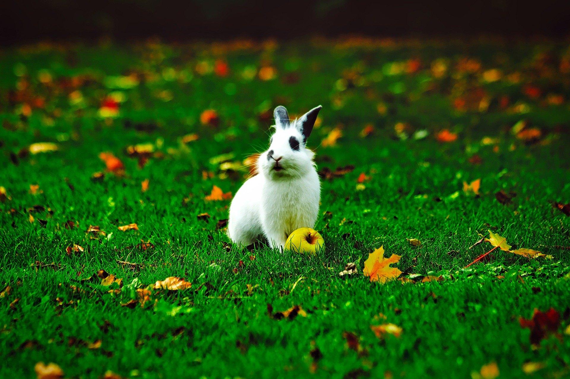 Je klec s výběhem pro králíka dobrý nápad?