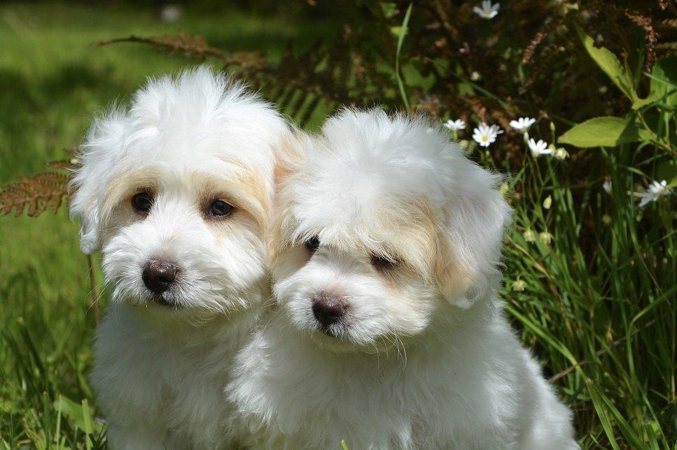 Nejoblíbenější bílí psi - seznamte se s 10 nejlepšími bílými psy.