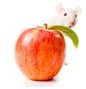Krmivo pro myši a pískomily