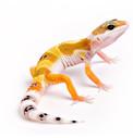 Krmivo pro gekony