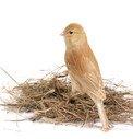 Budky pro ptáky