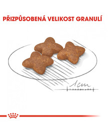 ROYAL CANIN Mini adult 8 kg granule pro dospělé malé psy