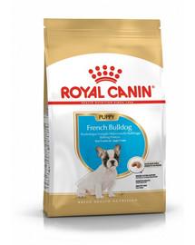 ROYAL CANIN French Bulldog Puppy 3 kg granule pro štěně francouzského buldočka