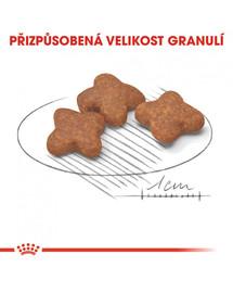 ROYAL CANIN Mini adult+8 8 kg granule pro stárnoucí malé psy