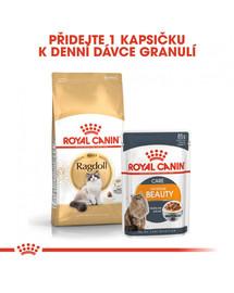 ROYAL CANIN Ragdoll Adult 10kg granule pro Ragdoll kočky