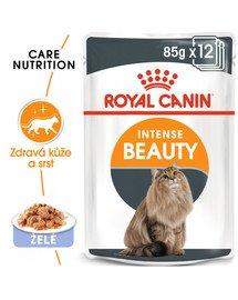 ROYAL CANIN Intense Beauty Jelly 85g kapsička pro kočky v želé
