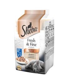 SHEBA Fresh Fine Mini v omáčce Mix příchutí 12x6x50g