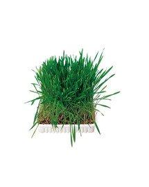 TRIXIE Tráva pro hlodavce v misce 100 g