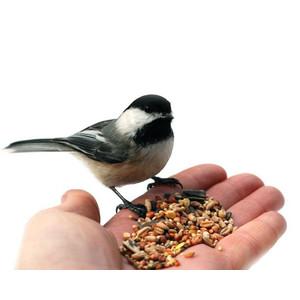 Krmivo pro venkovní ptactvo
