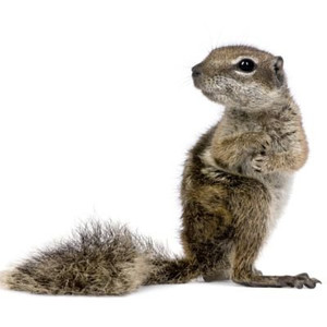 Krmivo pro ježky a veverky