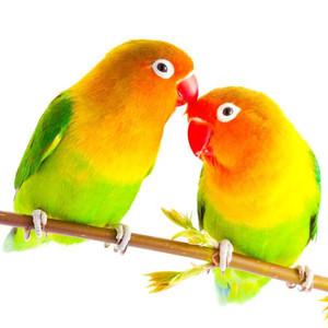 Krmivo pro velké ptáky