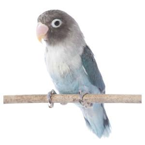 Žebříky a bidélka pro ptáky