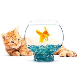 Pozadí do akvárií