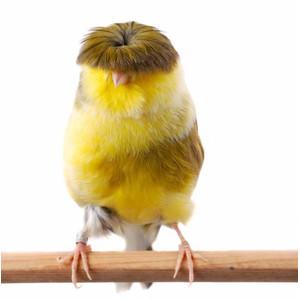 Příslušenství ke klecím pro ptáky