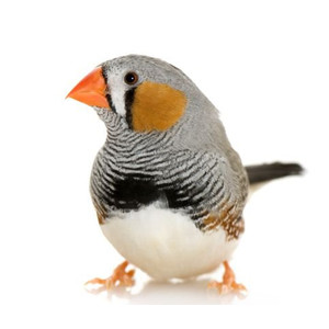 Krmivo pro malé ptáky