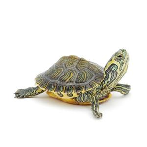 Krmivo pro vodní želvy
