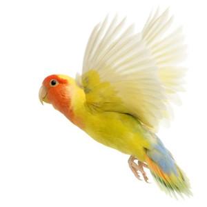 Vitamíny pro ptáky