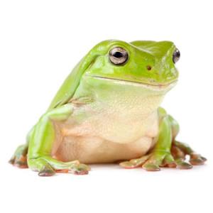 Krmivo pro žáby