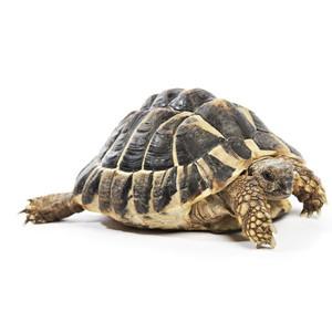 Krmivo pro želvy