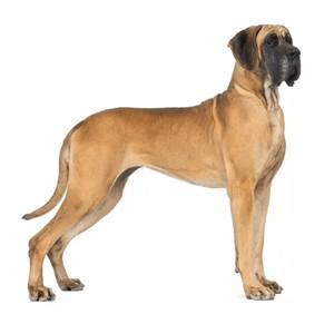 Granule pro německou dogu