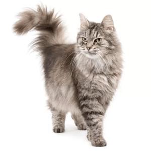 Krmivo pro kočky dle specifických potřeb
