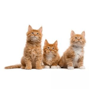 Krmivo pro kočky dle věku