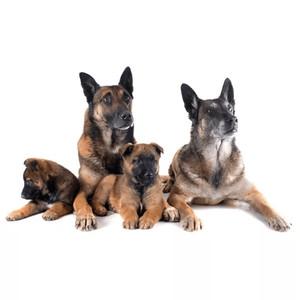 Krmivo pro psy dle fáze života