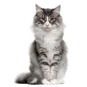 Krmivo pro kočky všech značek