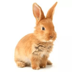 Klece pro králíky