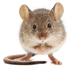 Klece pro myši