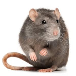 Klece pro potkany