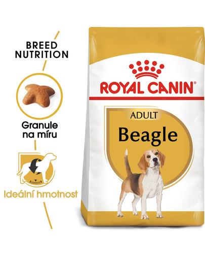 ROYAL CANIN Beagle adult 12 kg granule pro dospělé bígly