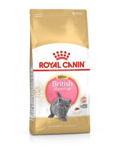 ROYAL CANIN British Shorthair Kitten 400g granule pro britská krátkosrstá koťata