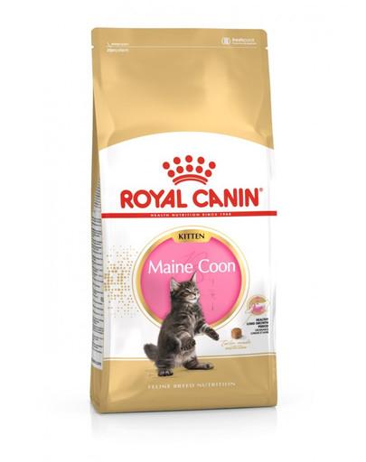 ROYAL CANIN Kitten Maine Coon 4 kg granule pro mainská mývalí koťata
