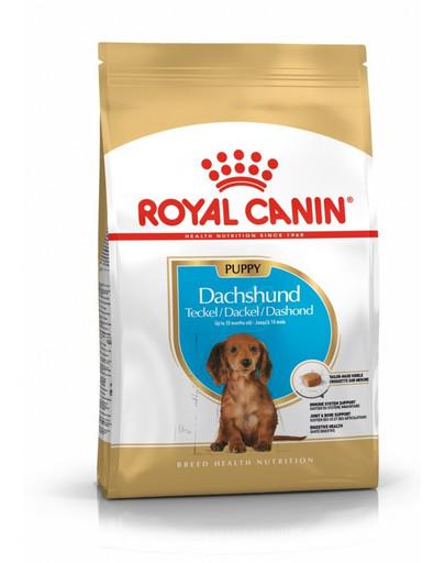 ROYAL CANIN Dachshund Puppy 1.5 kg granule pro štěně jezevčíka