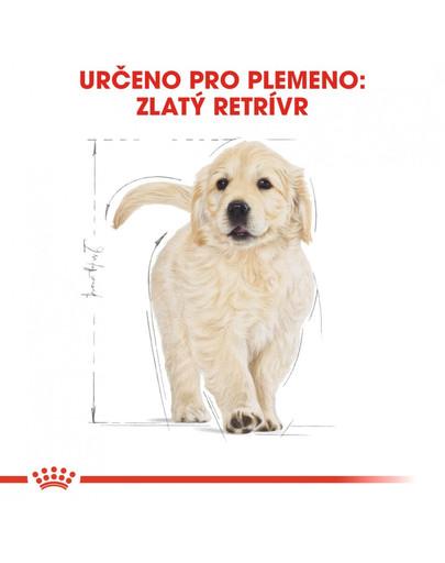 ROYAL CANIN Golden Retriever Puppy 3 kg  granule pro štěně zlatého retrívra