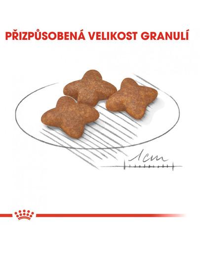 ROYAL CANIN Mini adult 800g granule pro dospělé malé psy