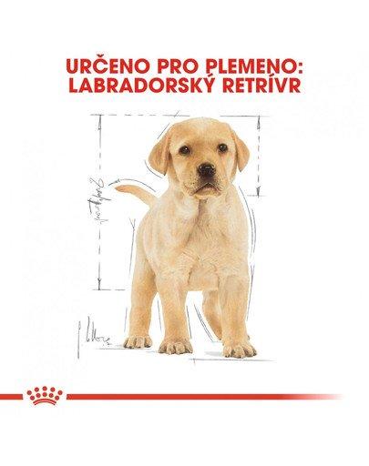 ROYAL CANIN Labrador Puppy 3 kg granule pro štěně labradora