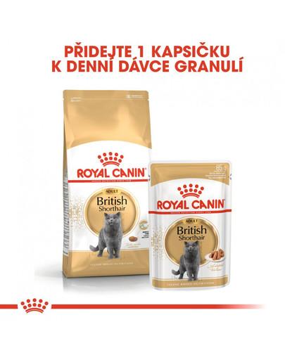 ROYAL CANIN British Shorthair Gravy 12x 85g kapsička pro britské krátkosrsté kočky ve šťávě