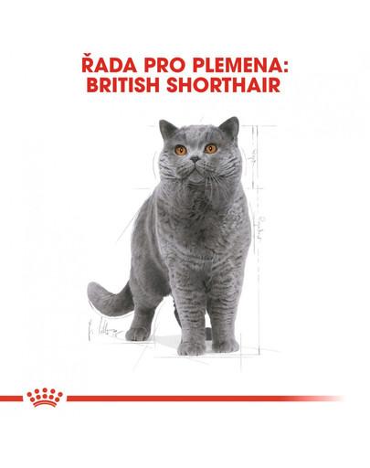 ROYAL CANIN British Shorthair Adult 2kg granule pro britské krátkosrsté kočky